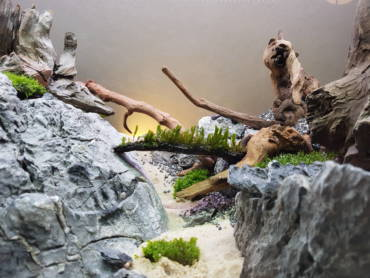 Detail Bild vom Hardscape