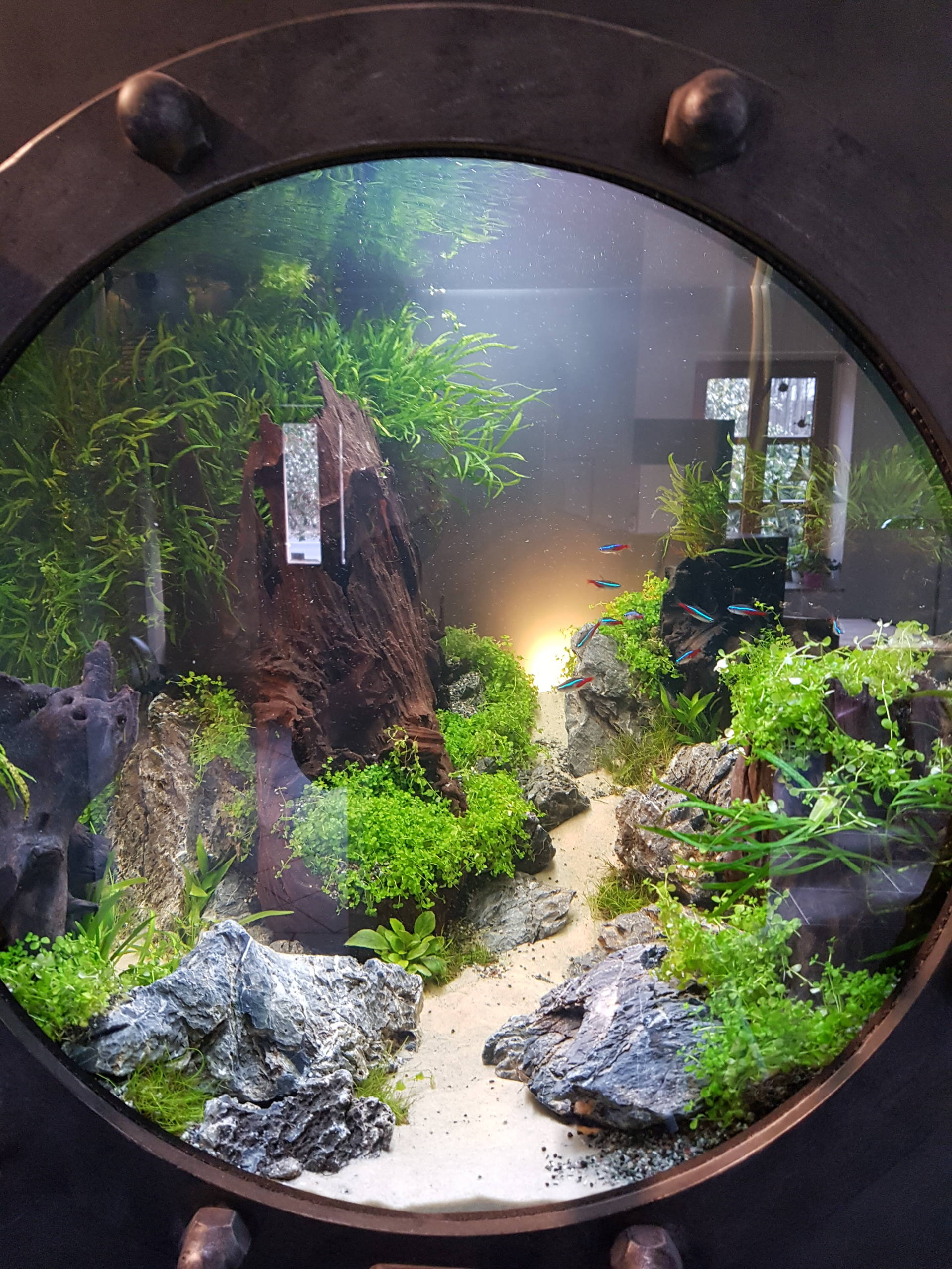 Bull eye Aquarium Aquascaping | Galerie Wasserwelten