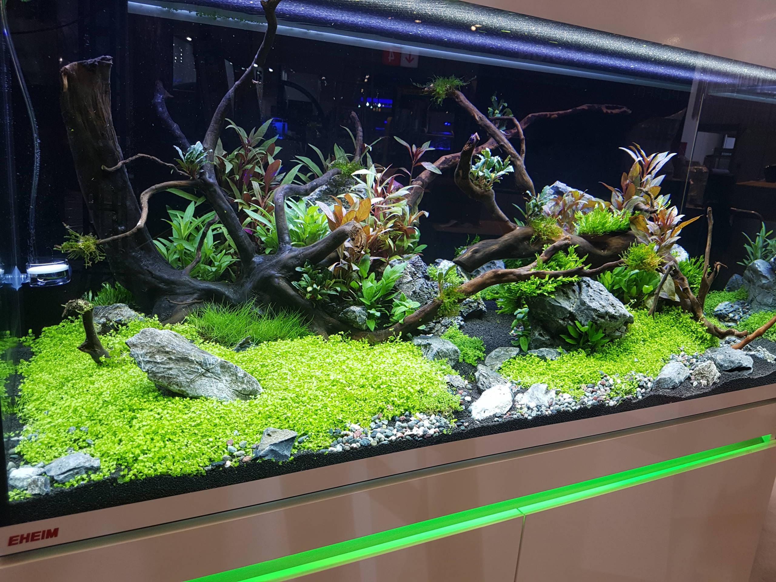 Galerie Wasserwelten Aquarium